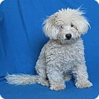 Adopt A Pet :: Polar - Walnut Creek, CA