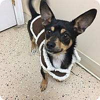 Adopt A Pet :: Tanner - Circleville, OH