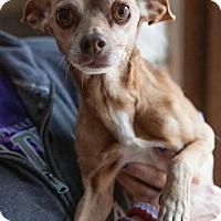 Adopt A Pet :: Taz - Matthews, NC