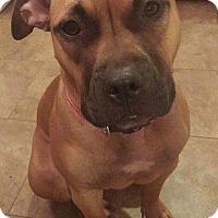 Adopt A Pet :: Suzy - DeForest, WI