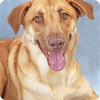 Adopt A Pet :: Lovely - Encinitas, CA