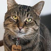 Adopt A Pet :: Toudou - Montreal, QC