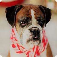 Adopt A Pet :: Rocky - Windermere, FL