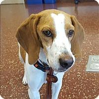 Adopt A Pet :: Missy - Morgan Hill, CA