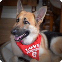 Adopt A Pet :: Mila - Fort Worth, TX