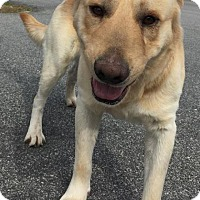 Adopt A Pet :: Yolo - Savannah, GA