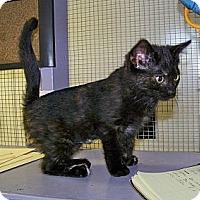 Adopt A Pet :: Lela - Dover, OH