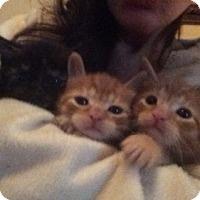 Adopt A Pet :: Citrus - Cranford/Rartian, NJ