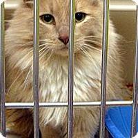 Adopt A Pet :: Sabrina - Ludington, MI