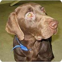 Adopt A Pet :: Chubbs - Wahoo, NE
