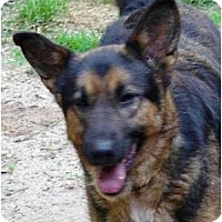 Adopt A Pet :: Charlie - Pike Road, AL