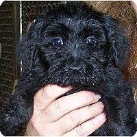Adopt A Pet :: Duncan - Antioch, IL