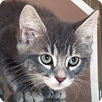 Adopt A Pet :: Duchess - Irvine, CA