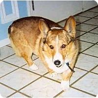 Adopt A Pet :: Sherman - Inola, OK