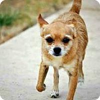 Adopt A Pet :: Rocco - Austin, TX