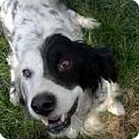 Adopt A Pet :: Prince - Pine Grove, PA