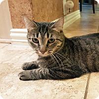 Adopt A Pet :: Zazzles - Arlington/Ft Worth, TX