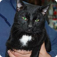 Adopt A Pet :: Drogo - Brooklyn, NY