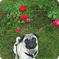 Adopt A Pet :: Dexter - Omaha, NE