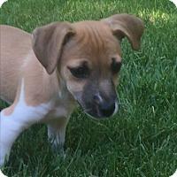 Adopt A Pet :: Daisy (ETAA) - Harrisonburg, VA