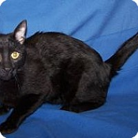 Adopt A Pet :: Swiss Roll - Colorado Springs, CO