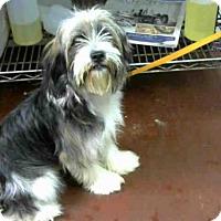 Adopt A Pet :: SCRUFFY - Atlanta, GA