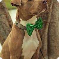 Terrier (Unknown Type, Small) Mix Dog for adoption in Loxahatchee, Florida - Bing