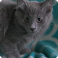 Adopt A Pet :: Dusty - Allentown, PA