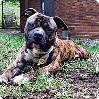 Adopt A Pet :: Klondike - Cleveland, OH