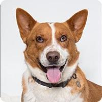 Adopt A Pet :: Dash - San Luis Obispo, CA