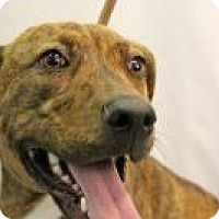 Adopt A Pet :: Maisey - Huachuca City, AZ