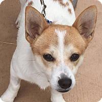 Adopt A Pet :: BENNY - Hurricane, UT