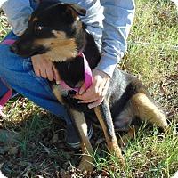 Adopt A Pet :: Ajax - Chicopee, MA