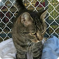 Adopt A Pet :: Bonny - Freeport, NY