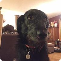 Adopt A Pet :: Wilma - Edmonton, AB