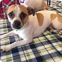 Adopt A Pet :: pop - Phoenix, AZ