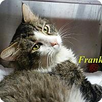 Adopt A Pet :: Frank - El Cajon, CA