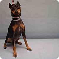 Adopt A Pet :: Toby - Ridgefield, CT