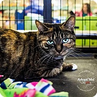 Adopt A Pet :: A..  Adrian - Mooresville, NC