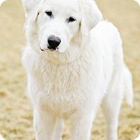 Adopt A Pet :: Lene - Salt Lake City, UT