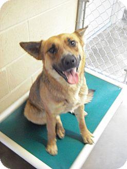 German Shepherd Dog Mix Dog for adoption in Wickenburg, Arizona - Willow