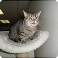 Adopt A Pet :: Hazel - Milwaukee, WI
