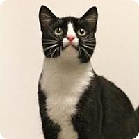 Adopt A Pet :: Kage - Sacramento, CA