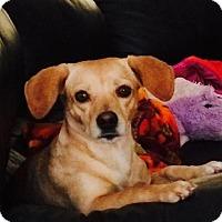 Adopt A Pet :: A283125 Victoria AKA Millie - San Antonio, TX
