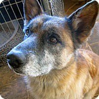 Adopt A Pet :: Killian - Santa Fe, NM