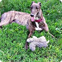 Adopt A Pet :: Stacey - Swanzey, NH