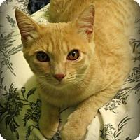 Adopt A Pet :: Sophie & Olivia - La Canada Flintridge, CA