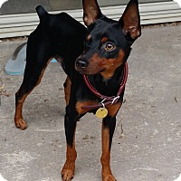 Adopt A Pet :: Titus - Oceanside, CA