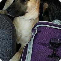 Adopt A Pet :: Ashton - mooresville, IN