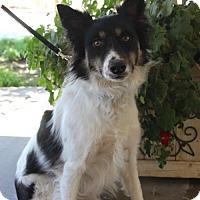 Adopt A Pet :: Zoey - Palo Alto, CA